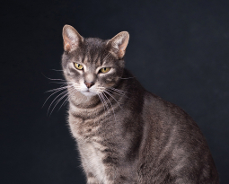 Pets photography in Surrey
